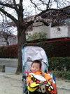 Hiromichi_20080329hanami3